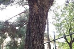Orto-Botanico-6