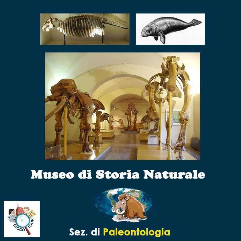 Paleontologico a Firenze
