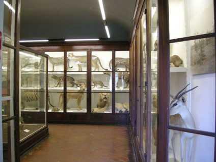 Museo della Specola